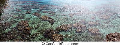 snorkeling, in, nuova caledonia
