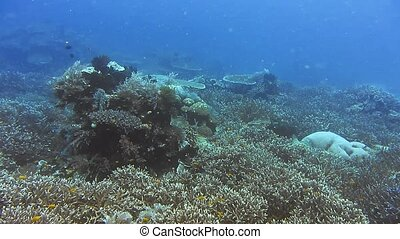 Snorkeling in the blue clear ocean water over rich coral ...