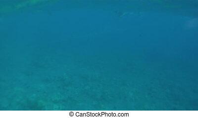 Snorkeling Molokini Crater 01