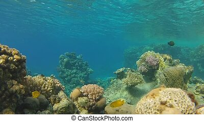 snorkeling - Beautiful coral, warm sea, exotic fish, diving...