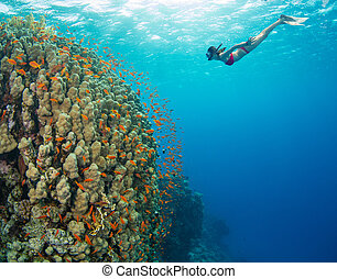Snorkeling woman exploring beautiful ocean sealife,...