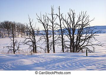snow., árvores