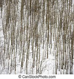 snow., árvores nuas