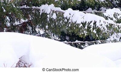 snow., филиал, новый, ель, fir-tree, ветви, дерево, зима, снег, год, хвойное дерево, белый, frost., крупный план, falling