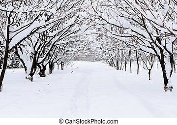 Snow alley in winter forest - Path through woodland after...