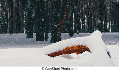 Snow And Pine Forest - Christmas Background. Winter forest...