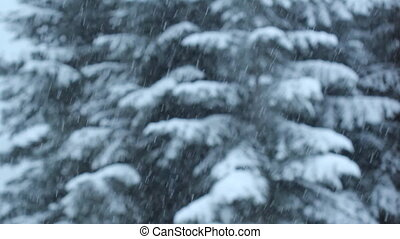 Snow and trees. Shallow DOF. - Snow falling with conifers in...