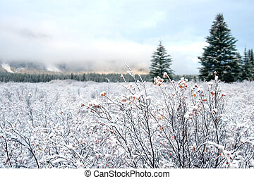 Snow and Winter Landscape - Snow covered landscapes in ...