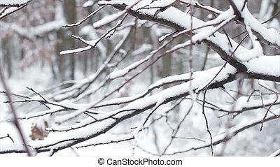 snow., arbres
