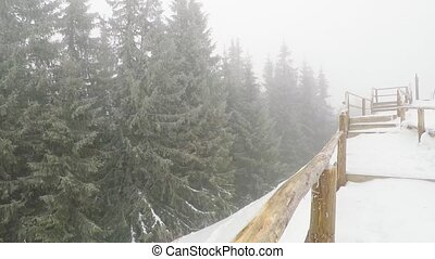 Snow blizzard in the mountain forest. snow falling at fir...