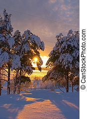 snow-bound, árboles, en, un, parque, y, ocaso