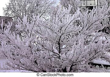 snow-bound, park, bäume