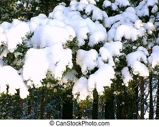 snow-bound, zweig