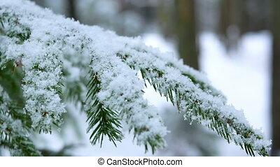Snow branch winter