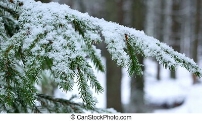 Snow branch winter - Snow covered branch in sun winter