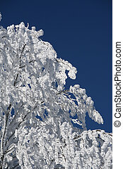 snow branches_2 -