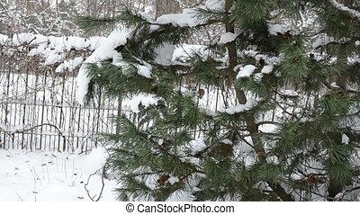 snow christmas tree clean