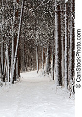 Snow-clad lane in winter wood