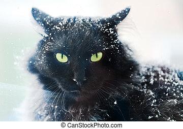 Snow covered black cat