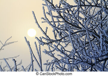 snow-covered branches and the sun in the fog,winter, winter...