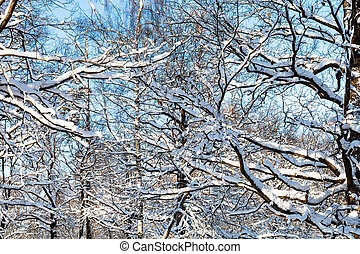 snow-covered branches in sunny winter day