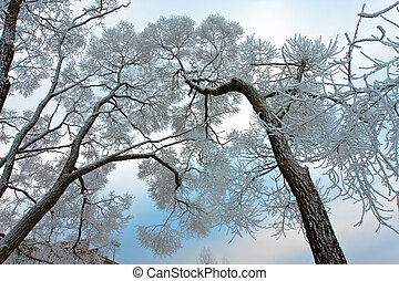 Snow-covered branches of tree on sky background