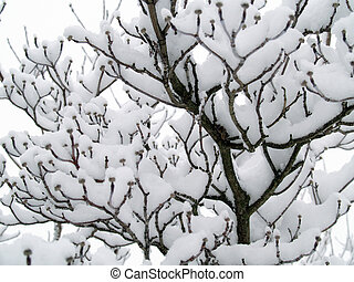 Snow Covered Branches on a Tree After a Snowfall