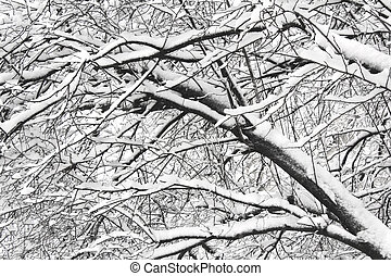 Snow covered branches trees
