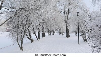Alley and benches in a snowy city park