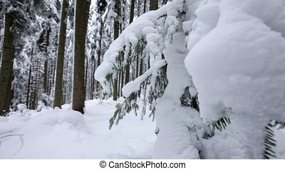 Snow covered coniferous forest. Dolly shot. Slow motion....