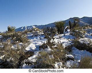 Snow Covered Desert