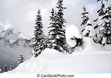 Snow Covered Evergreens - Snow covered evergreen trees high...