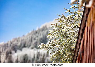 Snow covered fir branches over roof and forest