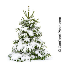 Snow-covered fir tree isolated on white