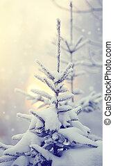 Snow-covered fir-tree