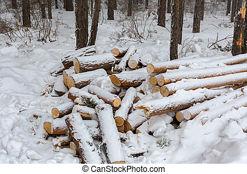 Snow-covered fire wood in pine forest.