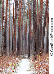 Snow covered footpath in a forest