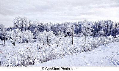 Snow-covered forest in winter white snow. Beautiful winter landscape in the park in the afternoon.