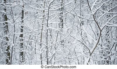Snow covered forest or park in winter with tree branches...