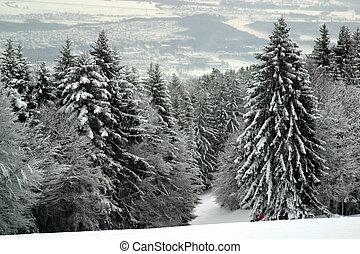 Snow covered forest, Sljeme, Zagreb, Croatia