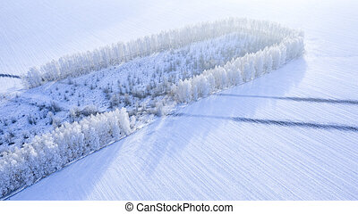 Snow-covered forest strip in the field, drone view