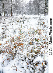 Snow-covered grass in city park