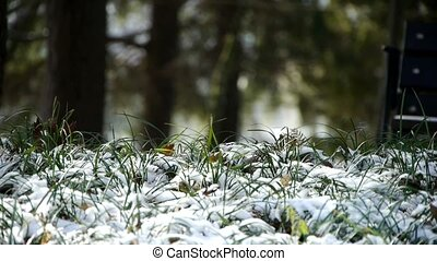 Snow covered grass, swaying in wind, Woods tree and jungle.