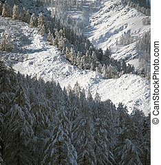 Snow covered larch and fir trees in the highlands. The snow sparkles in the sun. HDR - high dynamic range.
