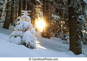 Snow covered little pine tree in winter forest