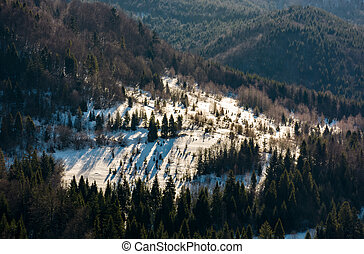 snow covered meadow among forest on hillside. beautiful...