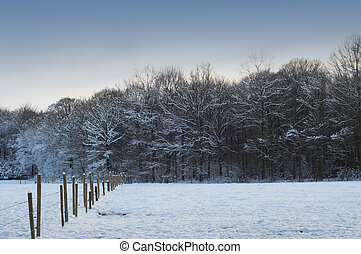 Snow covered meadow and trees in winter time