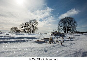 Snow-covered meadow and trees