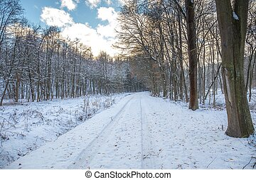 Snow covered path in a wooded winter landscape, snow falling from trees, footprints in the snow and tire tracks.