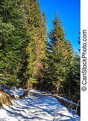 snow-covered pathway to coniferous forest on winter day -...